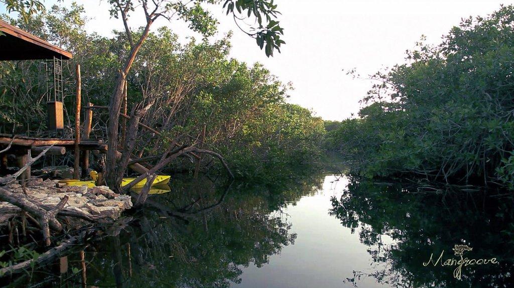 Mangroove Lodge
