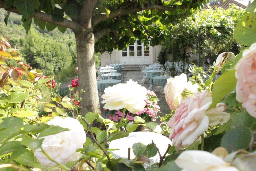 Fleurs d'Olargues