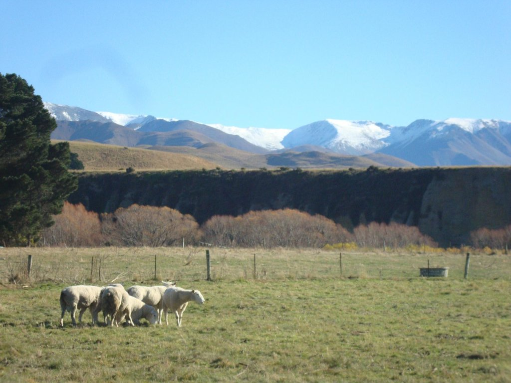 Glenmac Farmstay