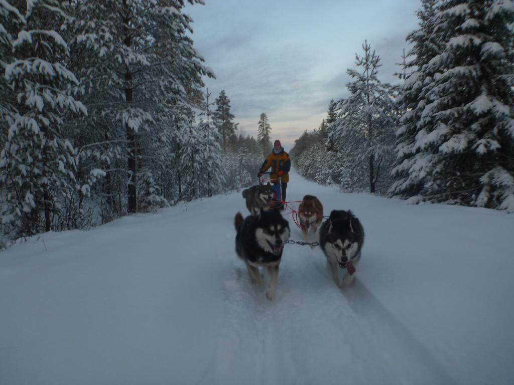 Wolf Trail Campground