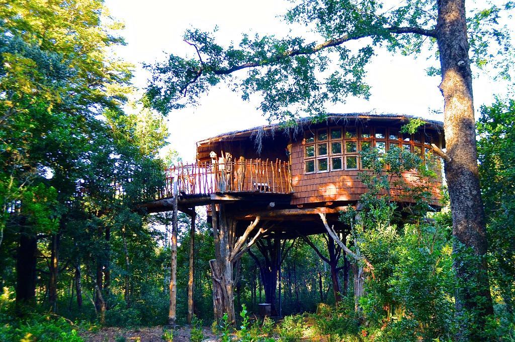 Tree Lodge Nidos de Pucon