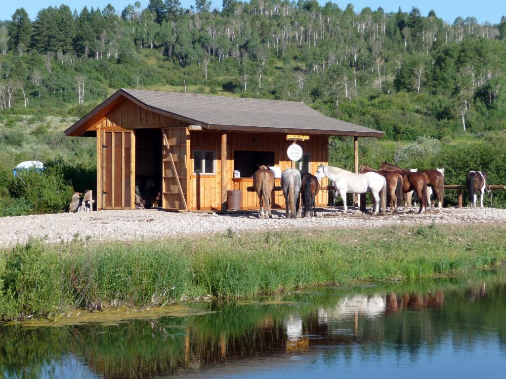 Rockin' M Ranch