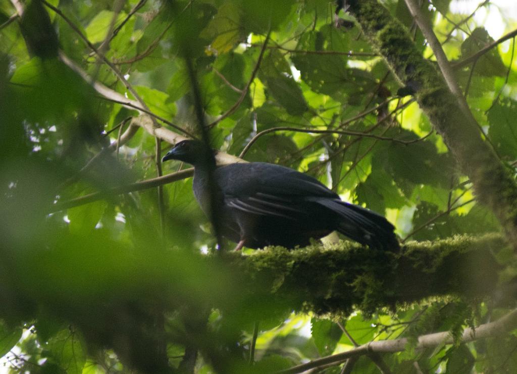 Talamanca Reserve