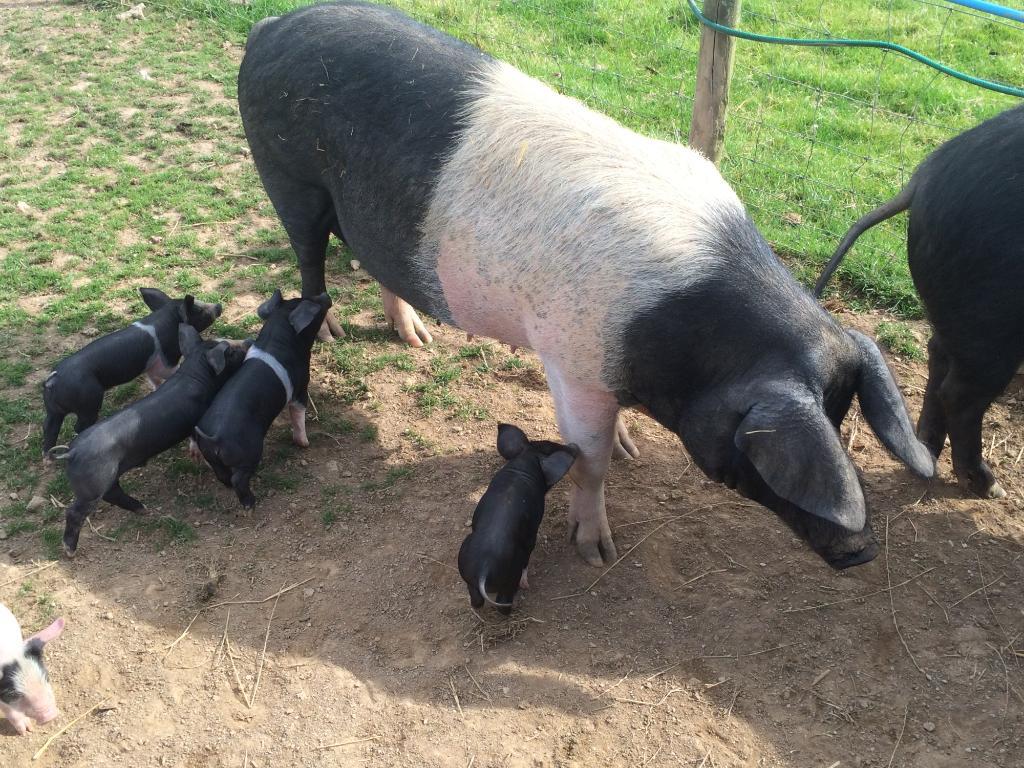 Penquite Farm
