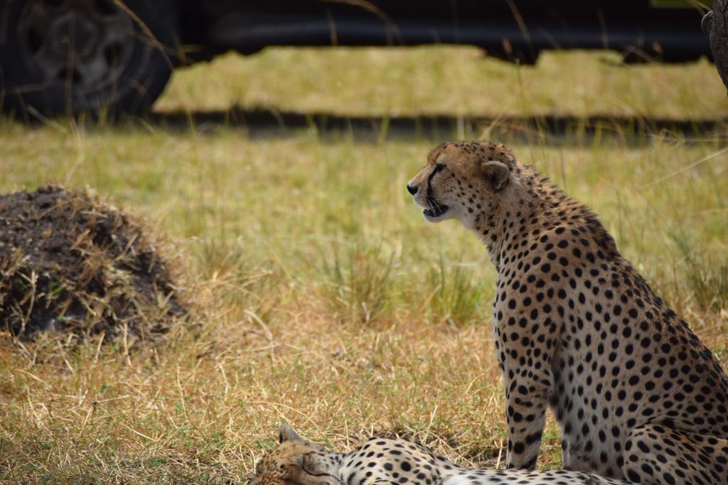Serengeti Safari Camp, Nomad Tanzania