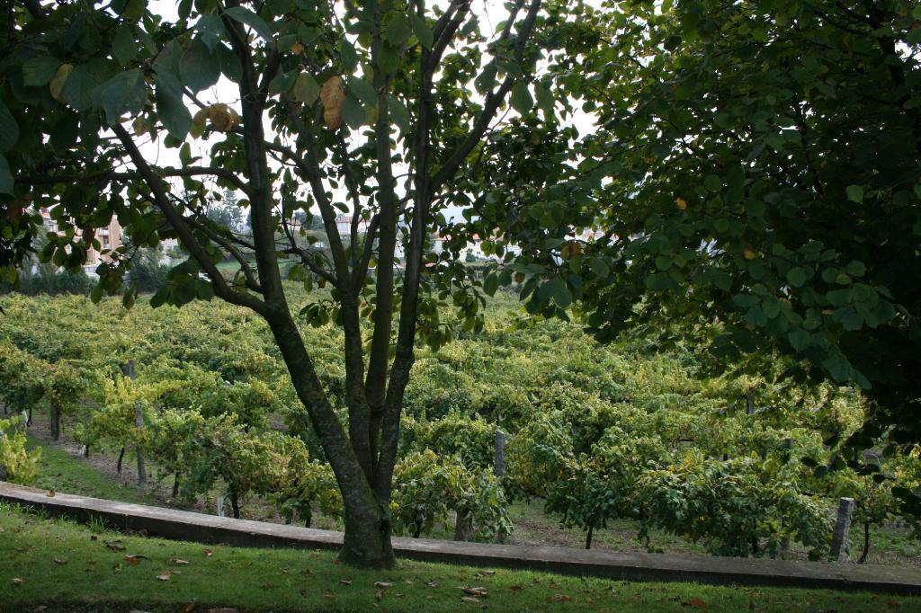 Quinta do Bacelo