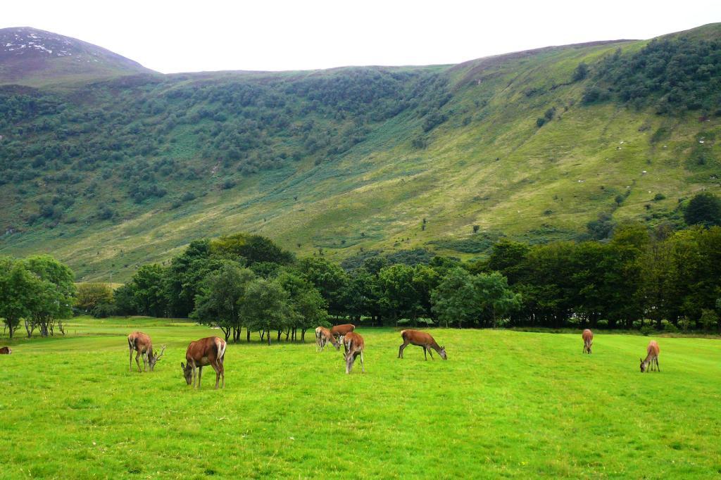 Lochranza Caravan & Camp Site