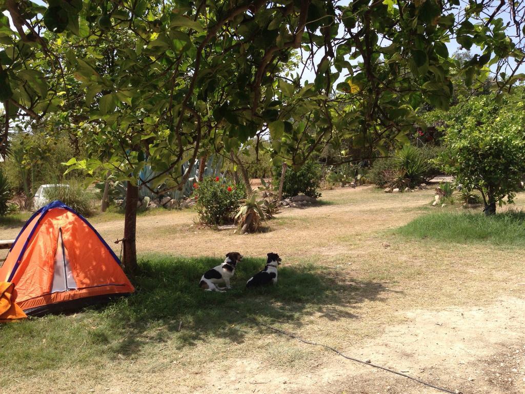 Camping Da Vinci