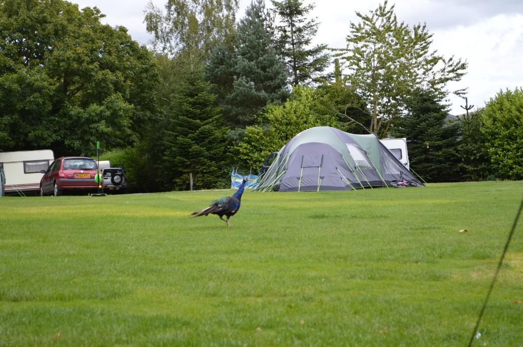Barn Farm Camping