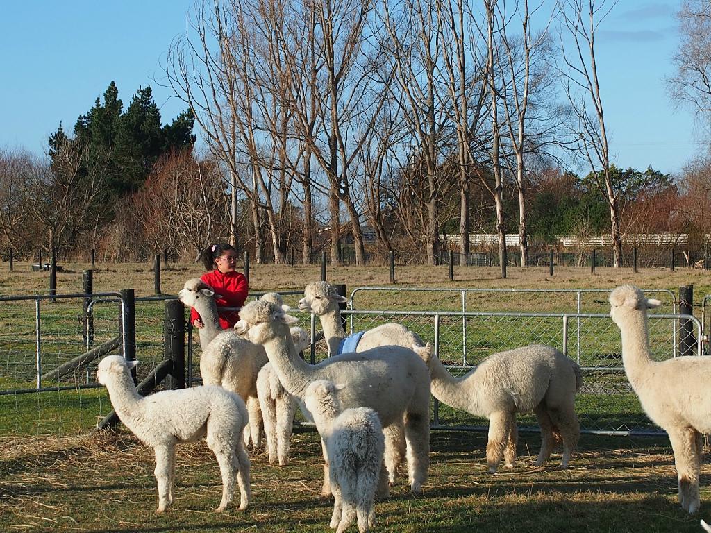 Alpaca Farmstay