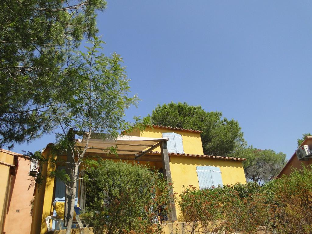 Palmiers de Palombaggia