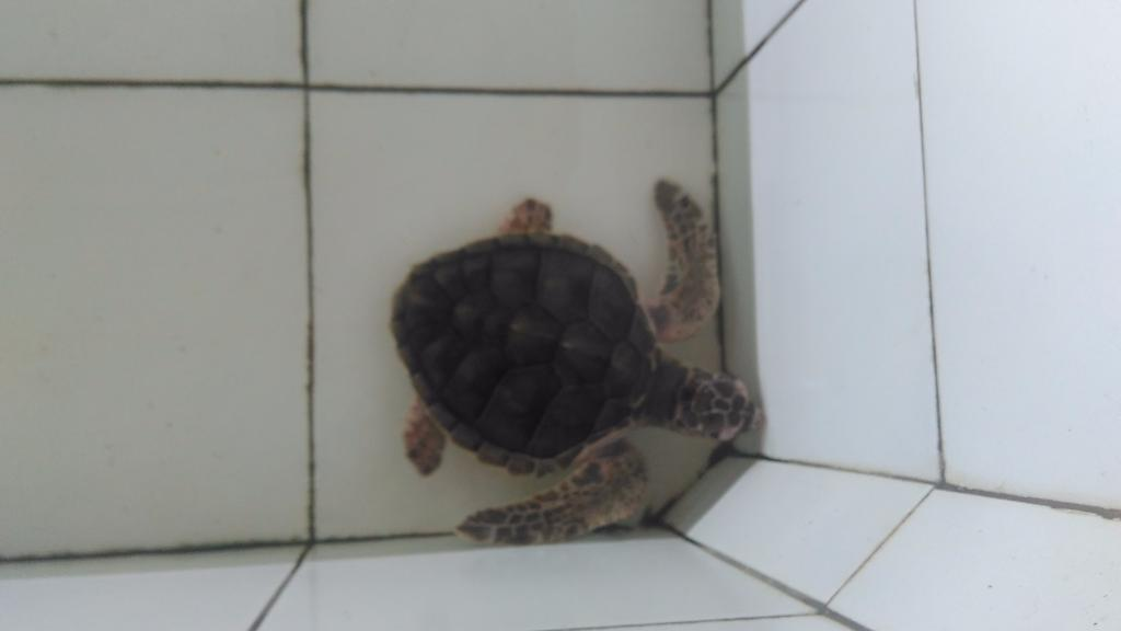 Sea Turtle Conservation Negara