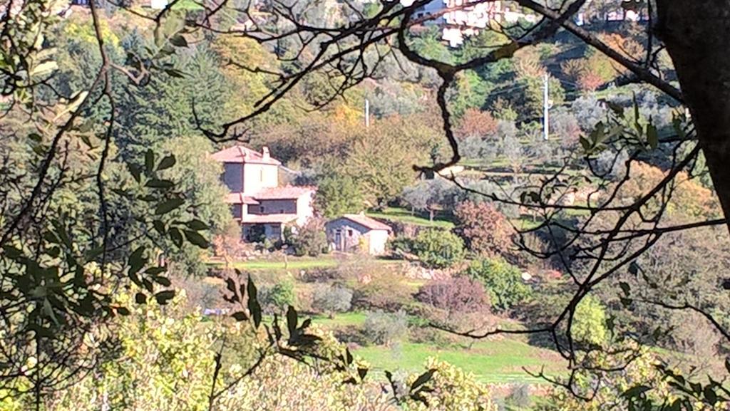Azienda Agricola Pasquini - Agriturismo Luce