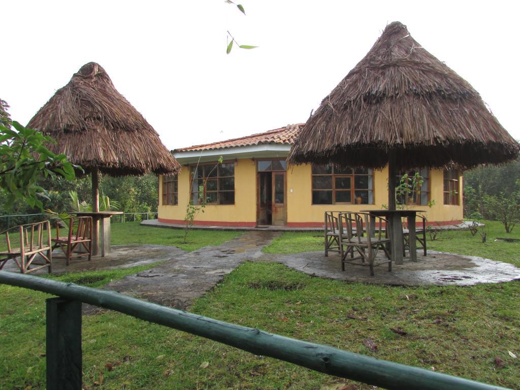 Abra Patricia - Owlet Lodge