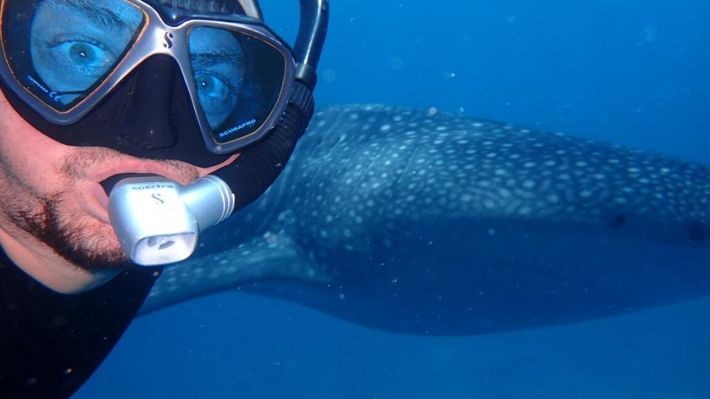 Whale Shark Inn