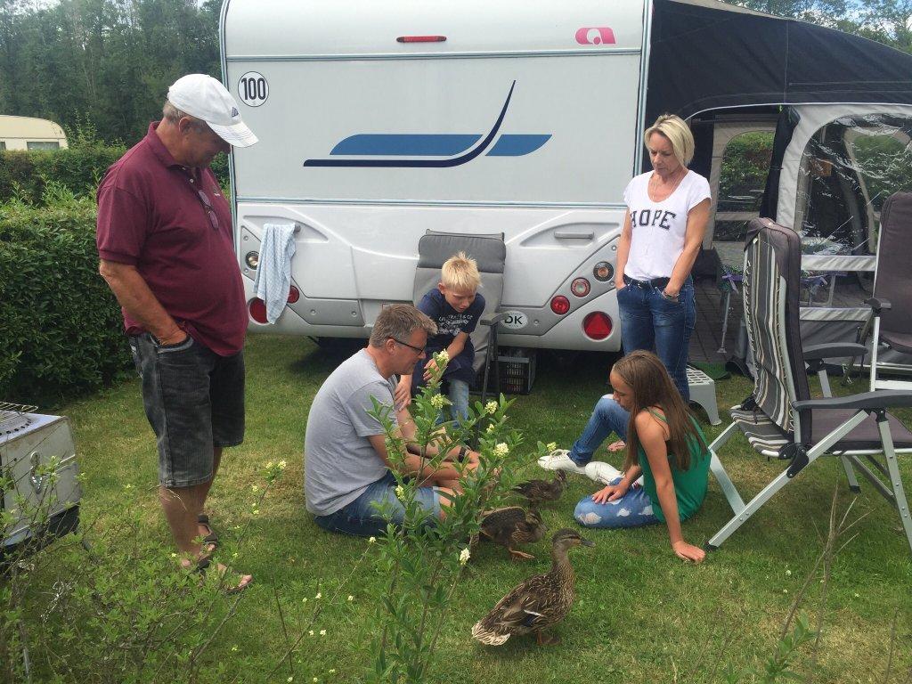 Skovly Camping
