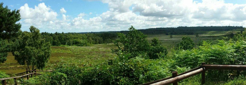 Dersingham Bog