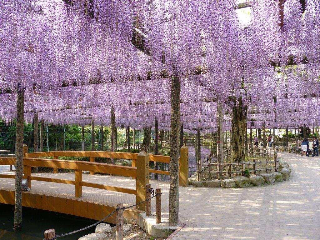 天王川公園の写真