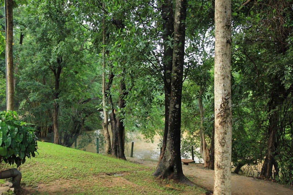 Dambulu Oya Family Park