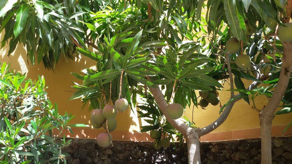 LABRANDA Oasis Mango