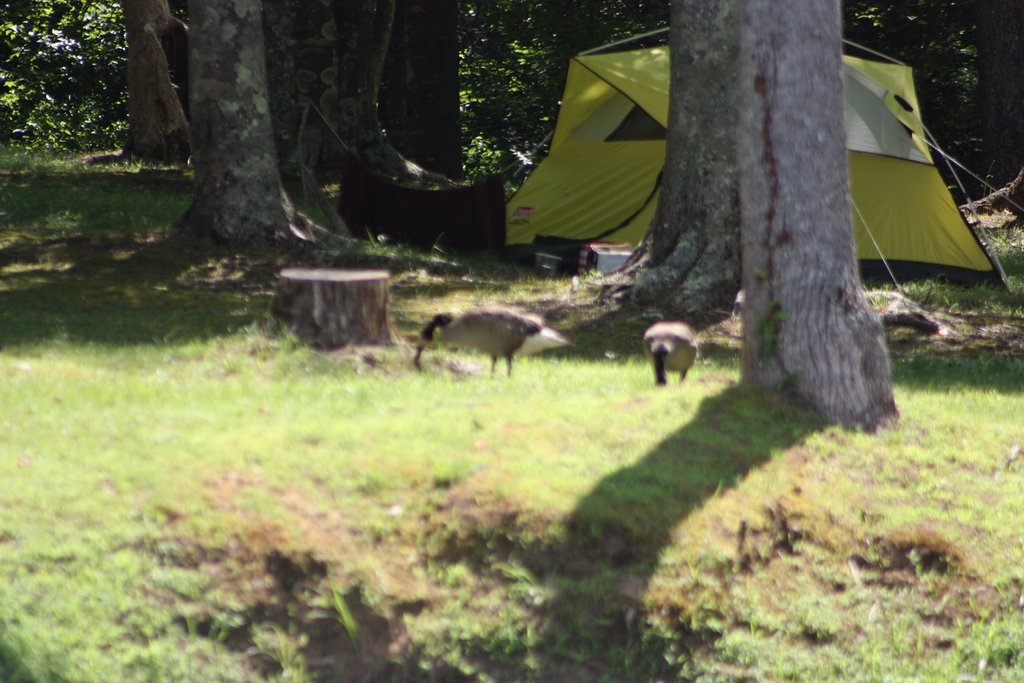 Blackwater Campground