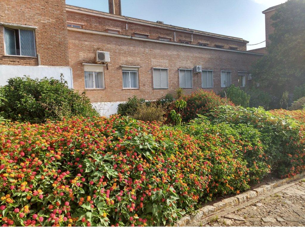 Complejo Residencial Lantana