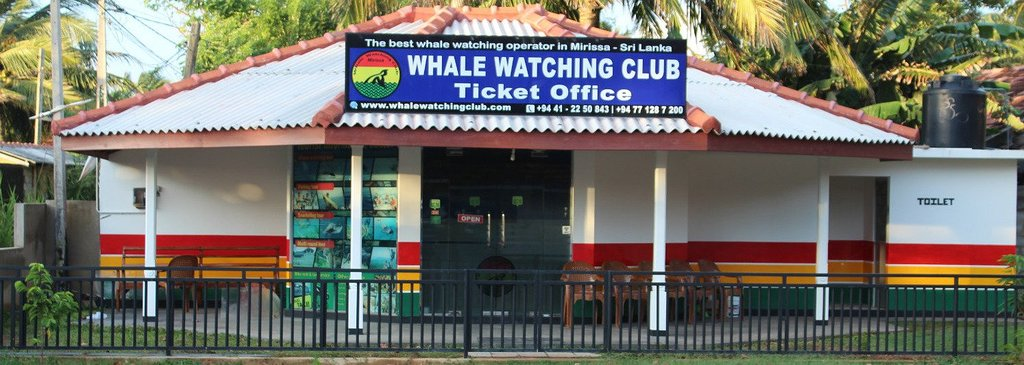 ‪Whale Watching Club‬