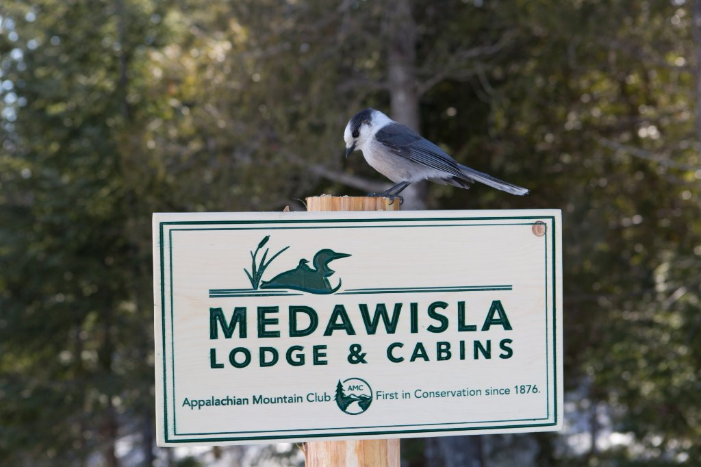 Medawisla Wilderness Lodge and Cabins