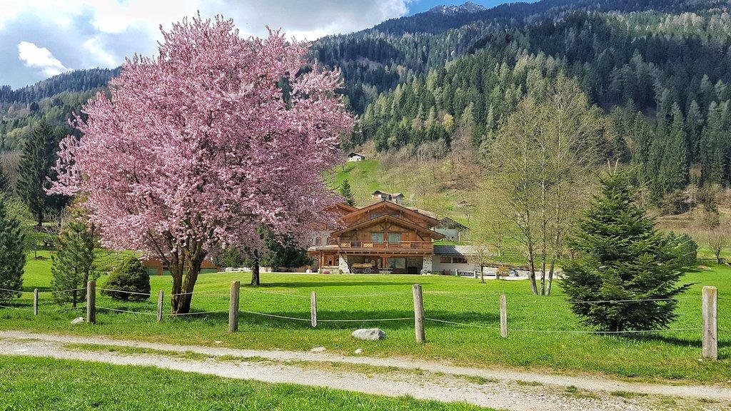 Maso del Brenta Chalet Alpino