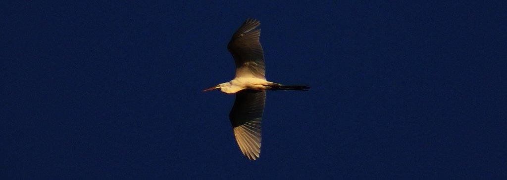Wild Skies Birding Tours