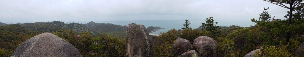 Worth The Walk! We Saw 7 Koalas!
