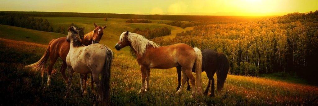 Alba View Equestrian