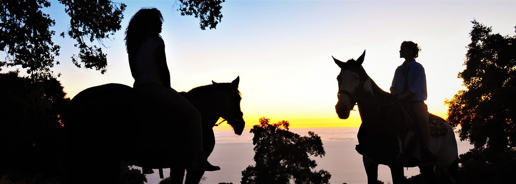 Big Sur Majestic Equine Services