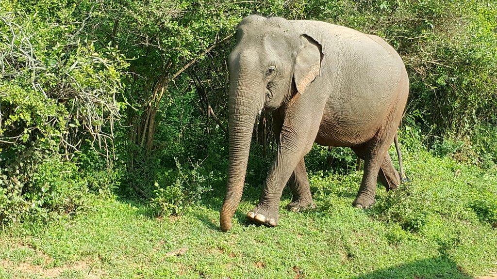 Nehansa Resort and Safari