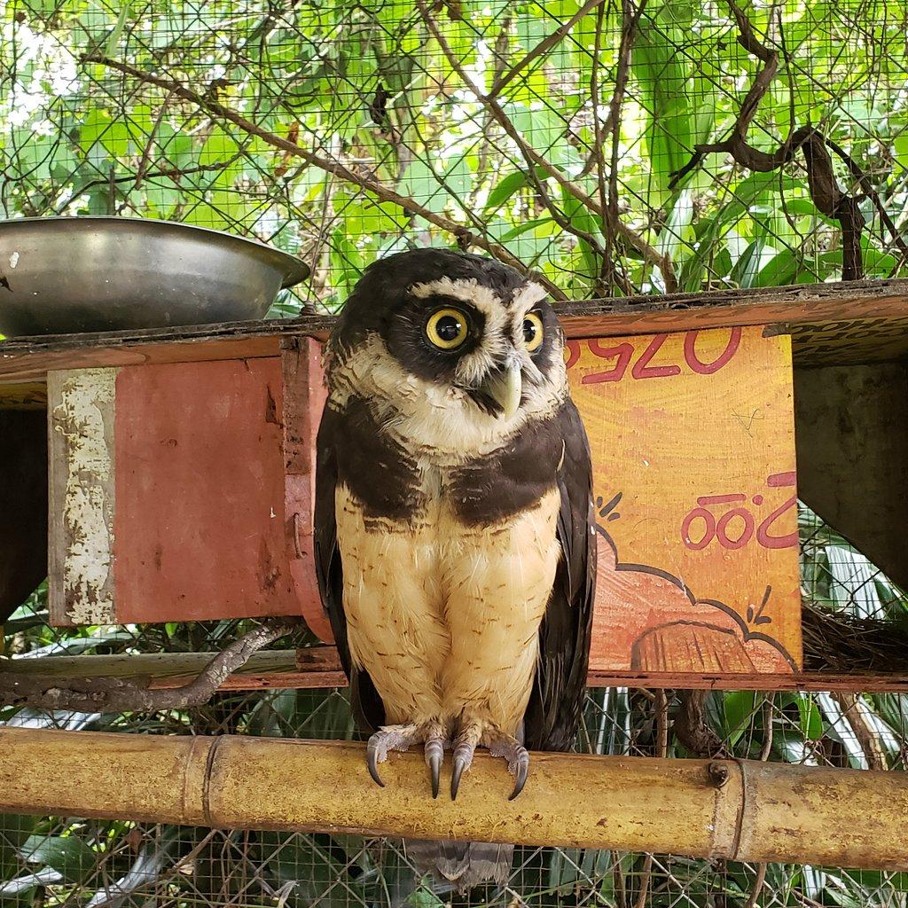 Jungla de Panama Wildlife Refuge