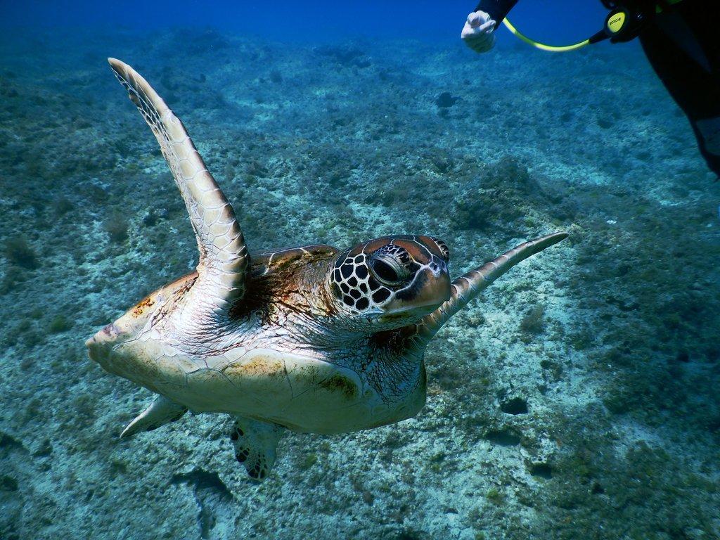 Fun Divers Tw Dive Center