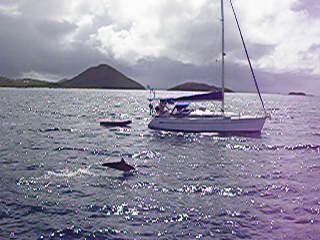 St Vincent och Grenadinerna: Dolphins, Friendship Rose, Tobago Cays