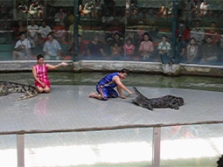 Паттайя, Таиланд: Si Racha Tiger Zoo - crocodile show 02