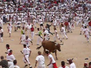 Pamplona, Spanien: WARNING - Bulls charging in arena