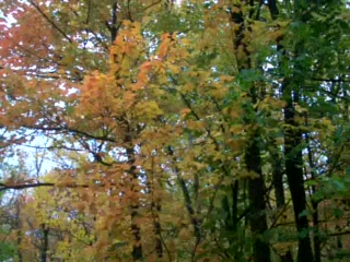 Hines, MN: 01 Fall leaves movie