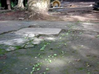 Guatemala: Leaf cutters