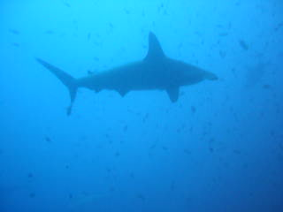 Puerto Baquerizo Moreno, Ecuador: plongee 2 avec les requins