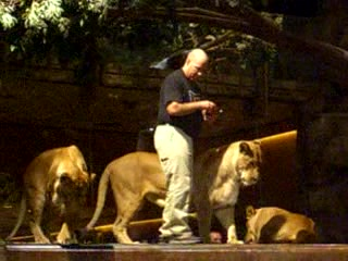 MGM Grand Hotel and Casino: 02 - Guy playing with Lions. Is he nuts?