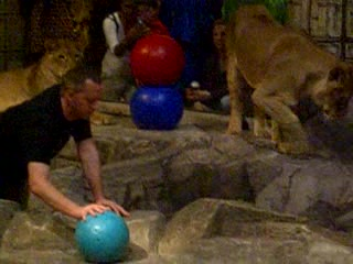 MGM Grand Hotel and Casino: 14 - Lion playing with some guys balls