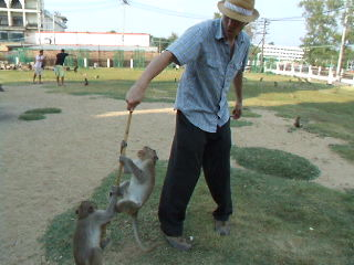 Lop Buri, Tailandia: 21 Monkey Attack Video