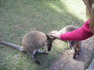 Hobart, Australien: M. Kangaroos