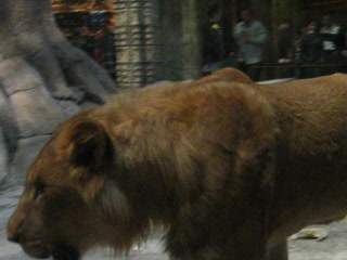 MGM Grand Hotel and Casino : MGM lions