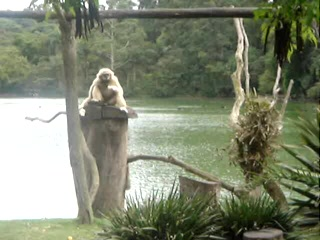 Sao Paulo, SP: just monkeying around
