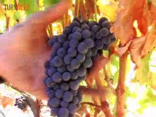 Napa Valley, Καλιφόρνια: Napa and Sonoma Wine