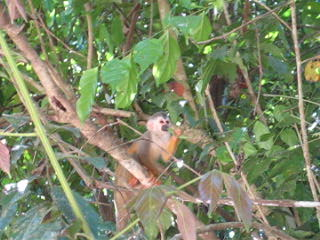 Manuel Antonio Nationaal Park, Costa Rica: More monkeys!